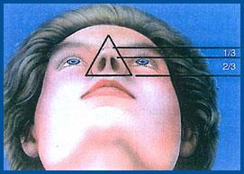 نمای زیر بینی زیبا